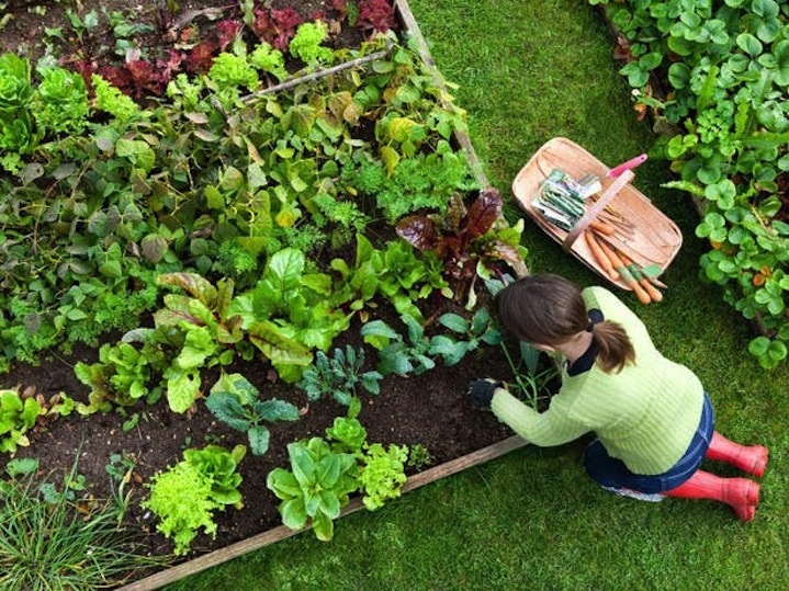 Learn How To Grow Your Own Food @ The CivicLab